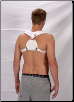 Clavicle Splint Large (XS-S-M-L-XL)